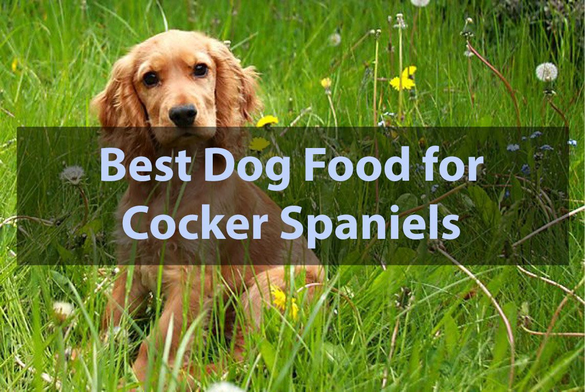 best dog food for cocker spaniels