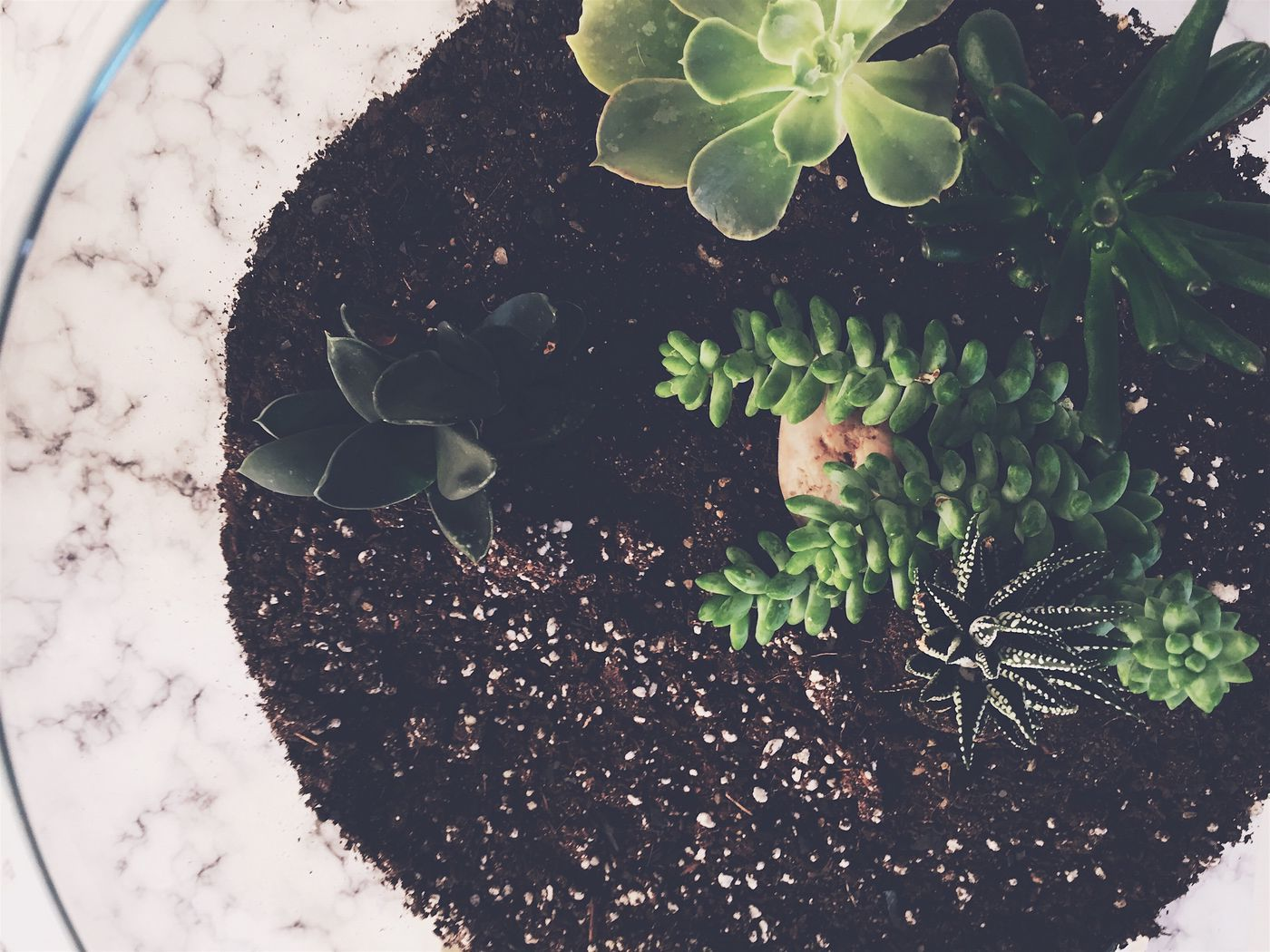 how to get rid of gnats in plants
